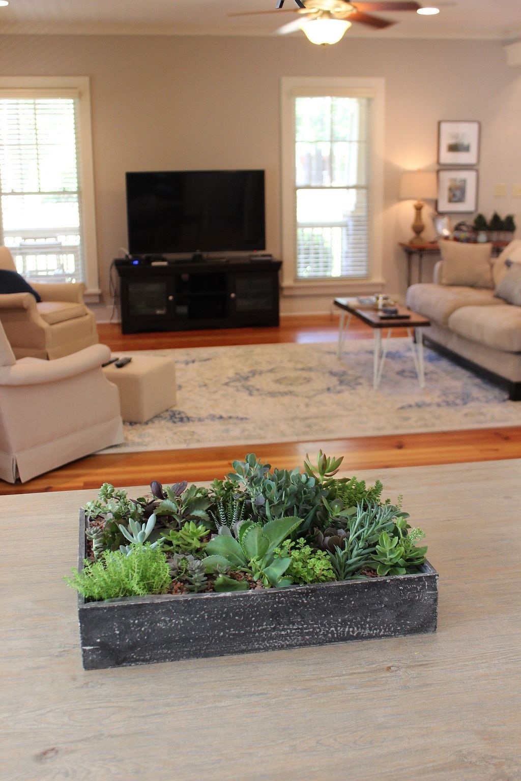38 Awesome Succulent Decoration Ideas For Living Room  Living Room Candidate Discount Living